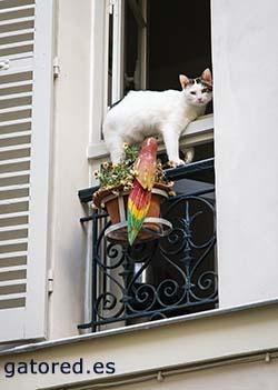 Síndrome gato paracaidista | Gatored