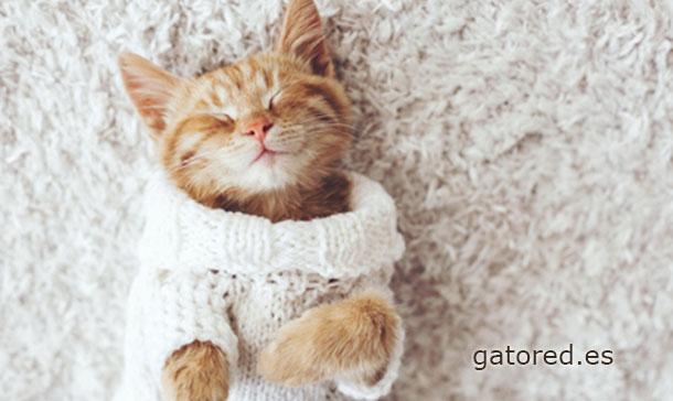 Gato Red mallas de protección para gatos