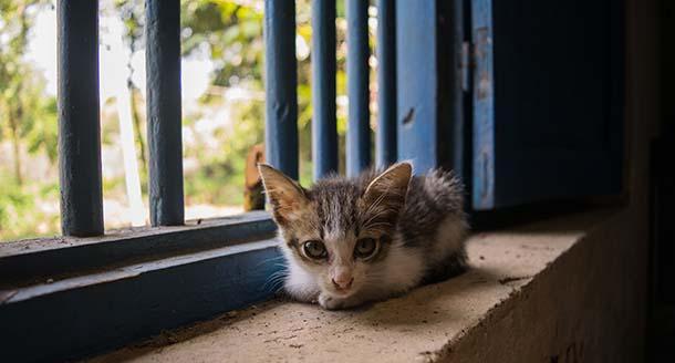 Cuida a tu gato - gatored