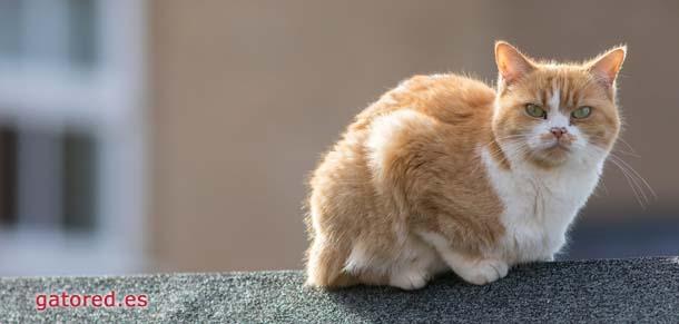 GatoRed instalacion de mallas y redes de seguridad para gatos