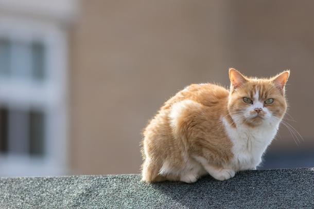GatoRed, Redes de protección para gatos