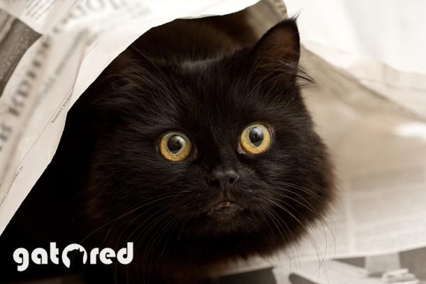 Gato Red empresa instaladora de redes de seguridad para gatos
