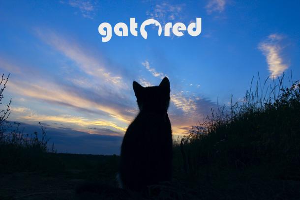 GatoRed, empresa instaladora de redes de protección para animales