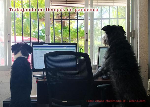 Teletrabajando en tiempos de pandemia